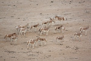 onagers1