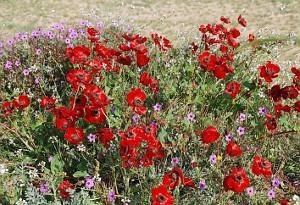 wildflowers1